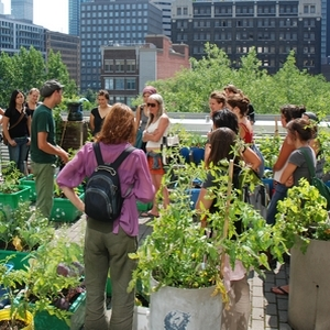 Agriculture urbaine : à Montréal, l'avenir est sur les toits.