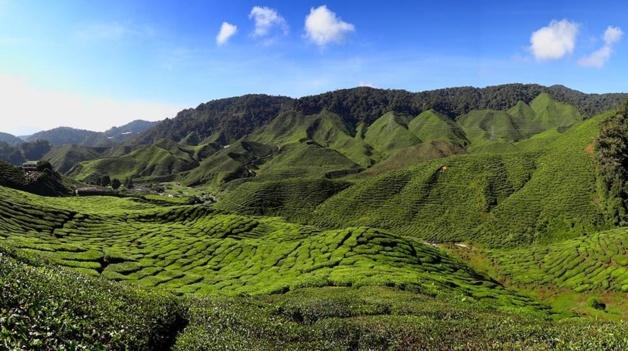The Bharat Tea Plantation near Tanah Rata in the Cameron Highlands, Malaysia | Crédit Photo : bjornfree.com / Bjørn Christian Tørrissen