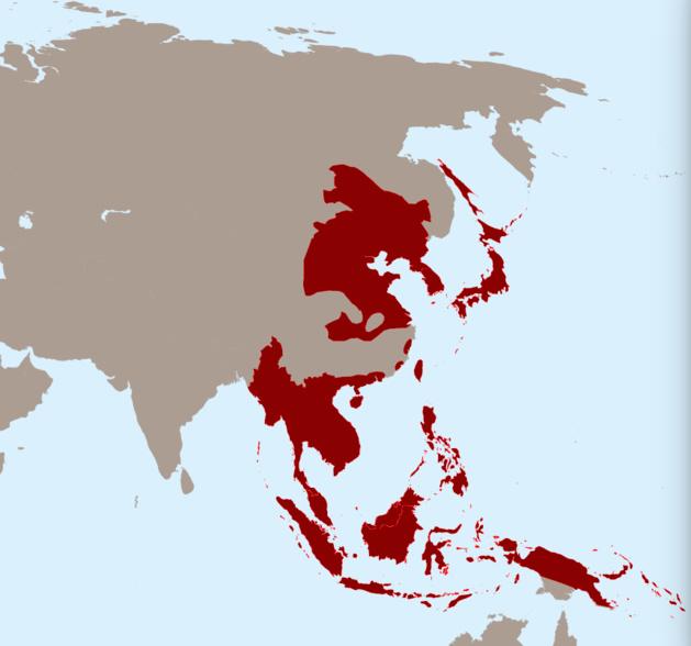 L'Empire Japonais au XXème siècle. Crédit DR