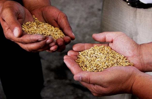 Lassistance américaine dans le secteur de l'agriculture. Crédit USAID