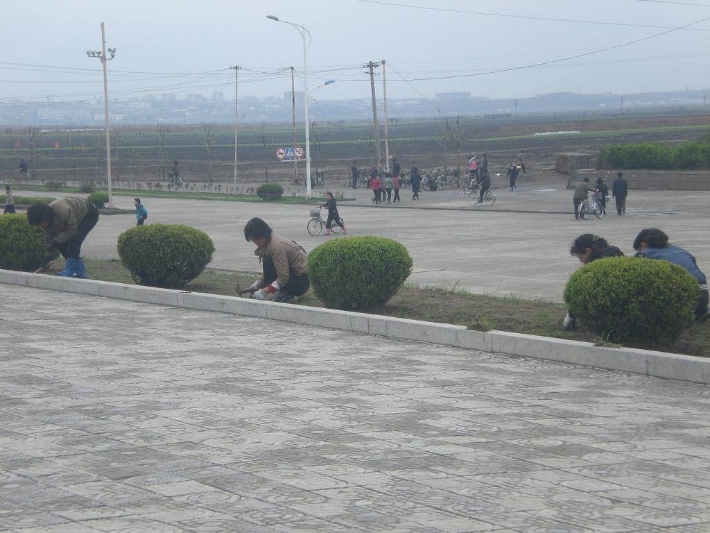 """Des nord-coréens plantent l'herbe """"révolutionnaire"""". Crédit Justine Jankowski"""