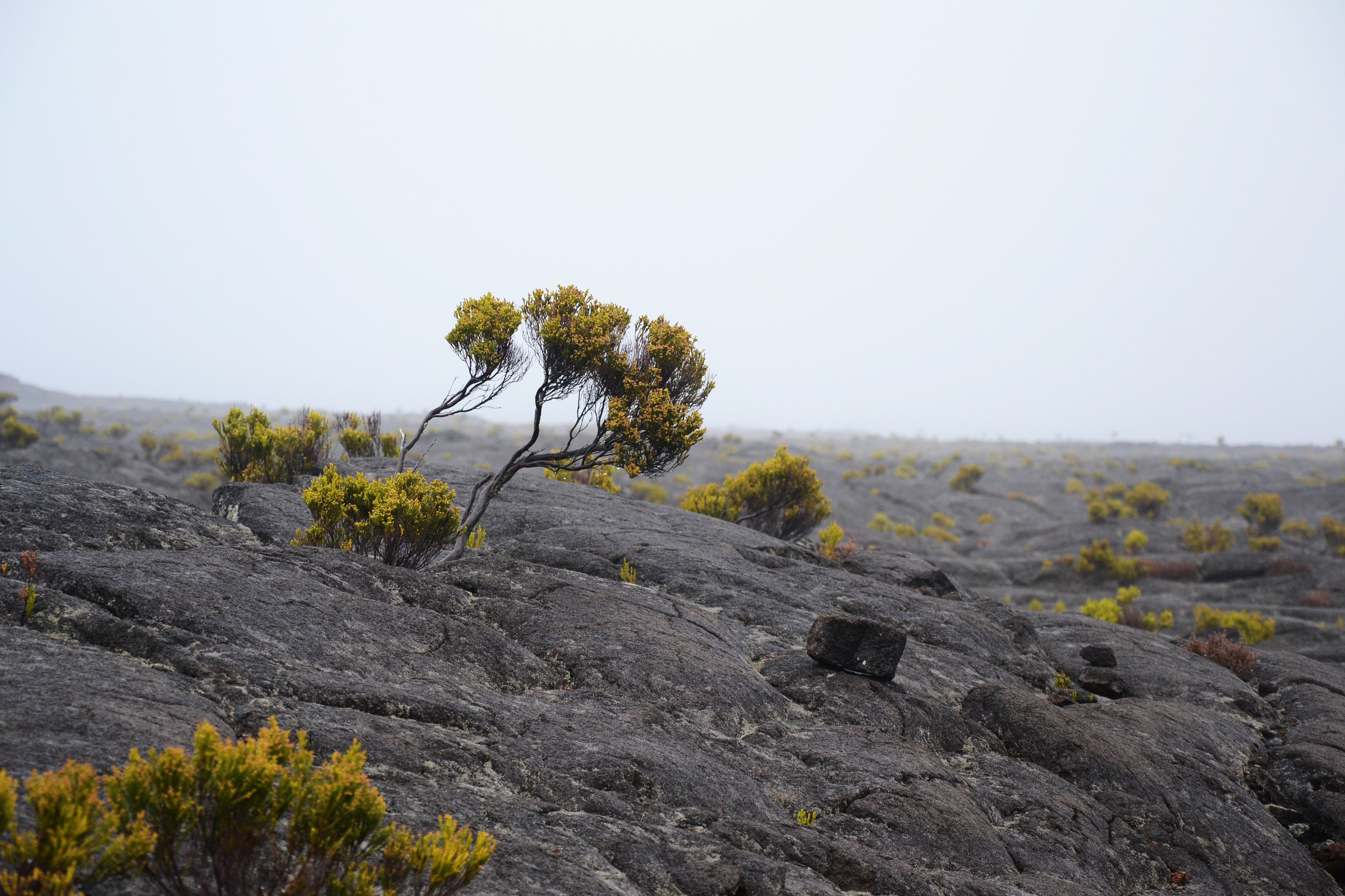 L'île de la Réunion - Crédit Marie Pothin