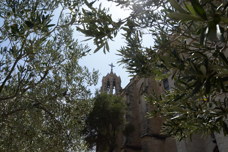 Les oliviers de l'église et le clocher de celle-ci. Crédit Auriane Guiot