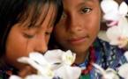 Los indígenas se indignan con la cultura mainstream