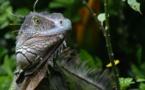 Le Costa Rica, l'écologie comme empreinte