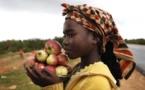 Angola : a nova potência econômica africana