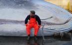 Caça às baleias, tradições contra os oceanos