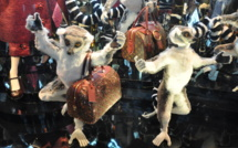 Paris : des vitrines bling-bling pour Noël