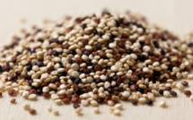 Quinoa: Bolivia's Golden Ticket to Catastrophe