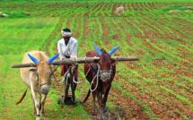 Inde : une réforme qui facilite l'achat de terres