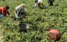 Des Italiennes esclaves des champs