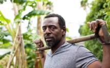 Guerilla gardening : des légumes à l'assaut du bitume